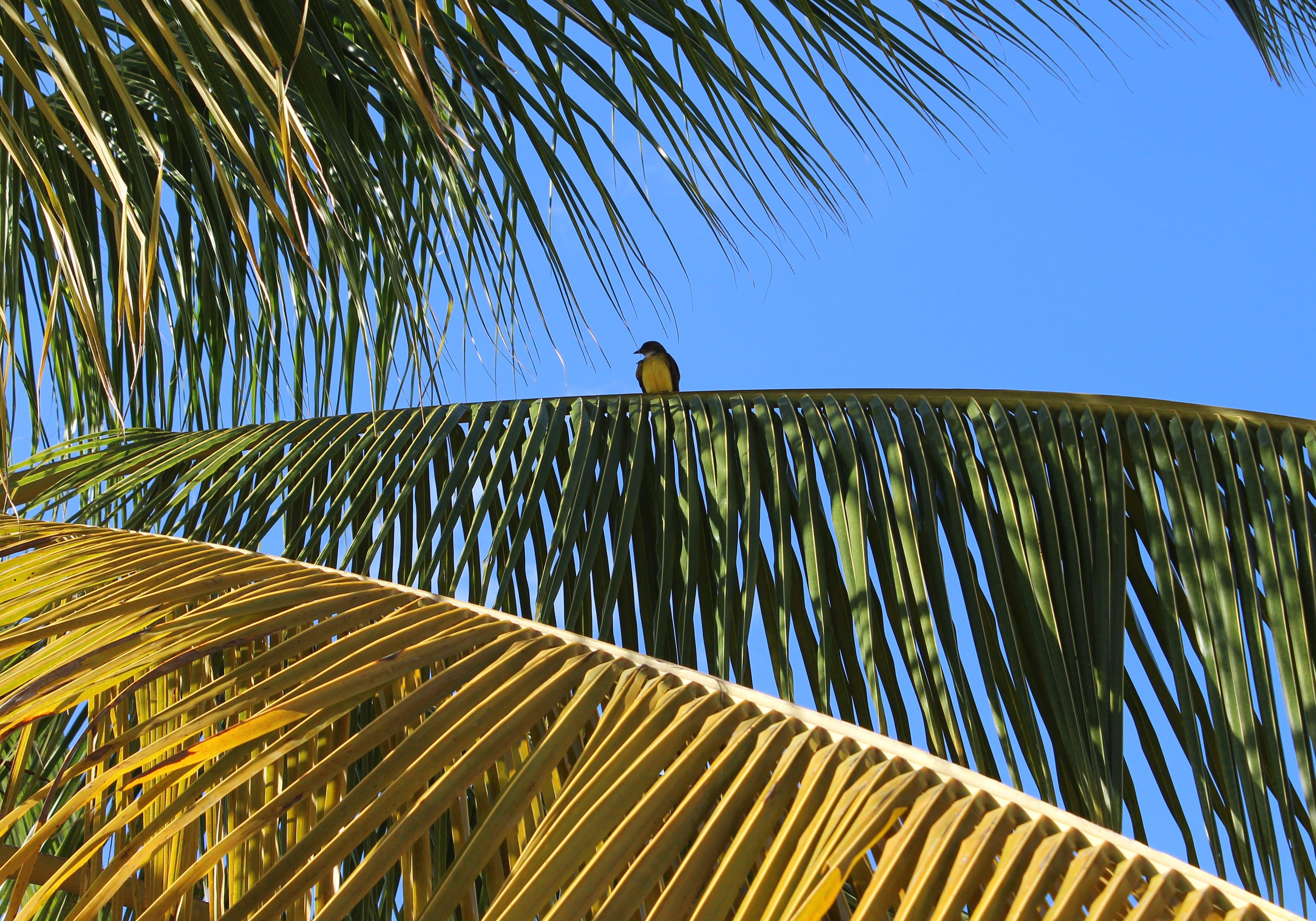 Betaalbaar huren in Suriname