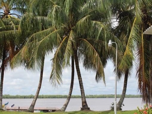 Vakantie Suriname palmbomen