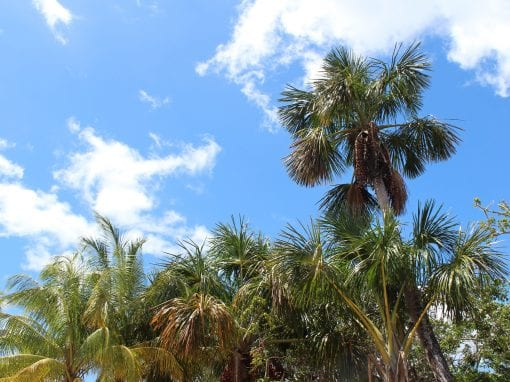 vakantie suriname palmen
