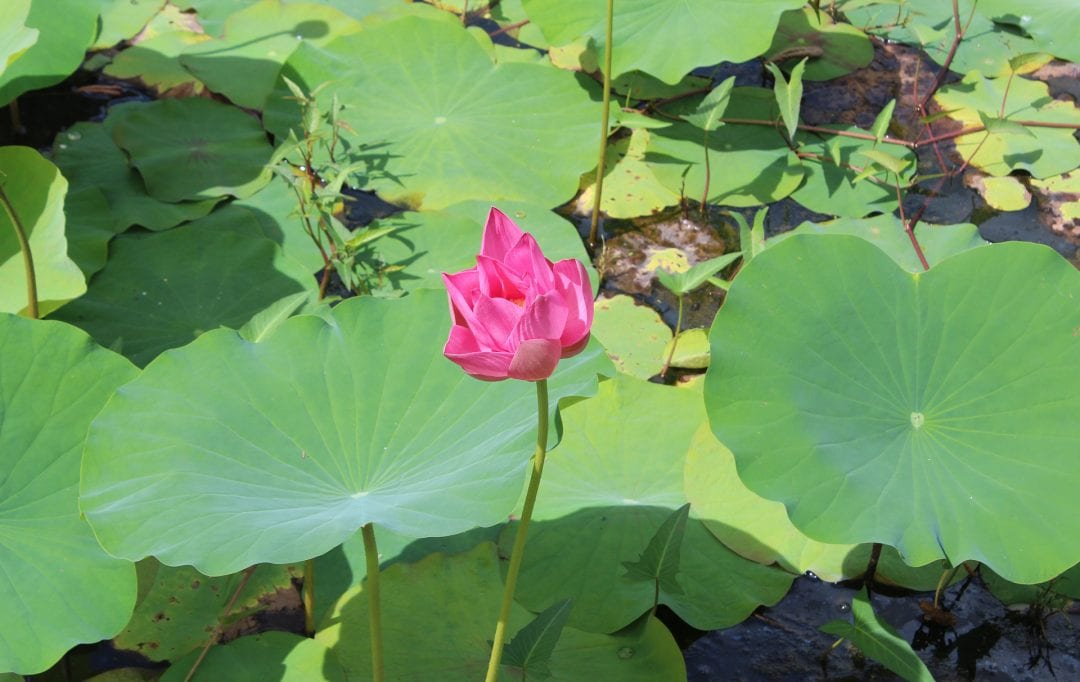 vakantiehuis paramaribo bloem in water