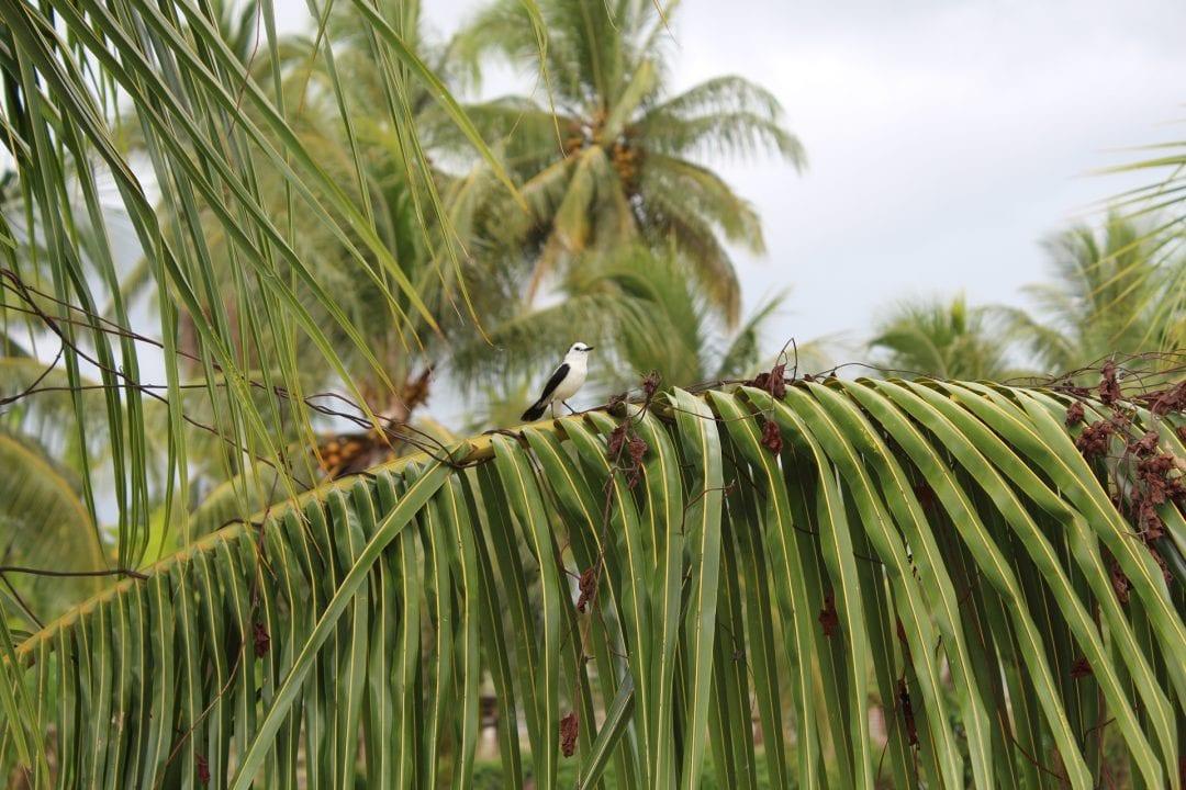 vakantiehuis paramaribo vogeltje