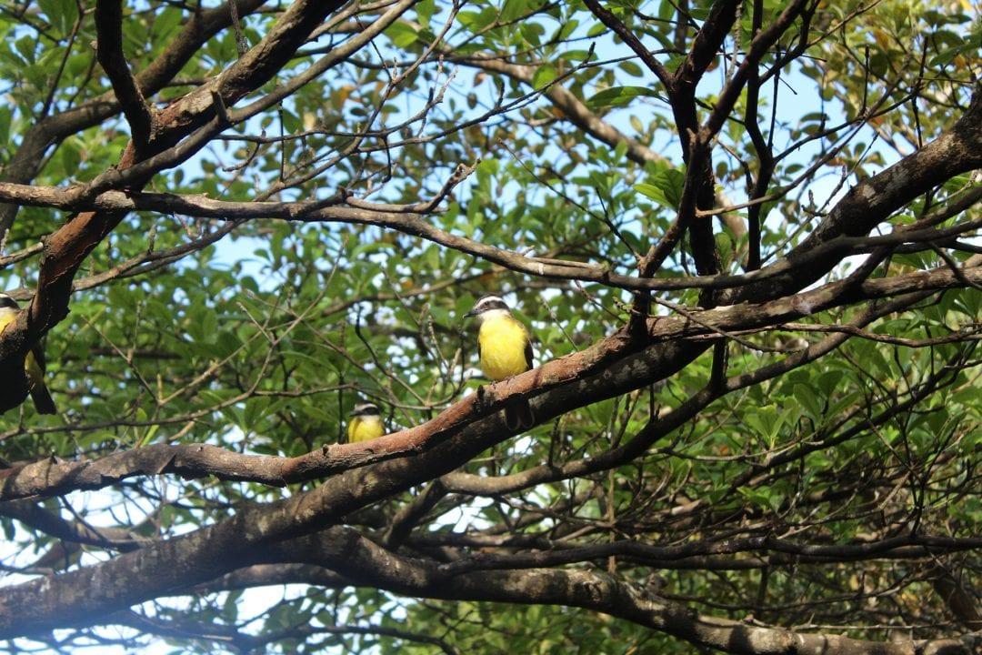 Vakantiewoning paramaribo - vogels